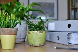 Desk Plant How A Desk Plant Can Bring Surprising Benefits To Your Business