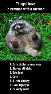 Racoon Meme - things i have in common with a raccoon funny animal meme humor