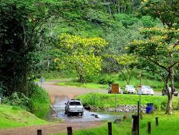 Rainbow Eucalyptus Rainbow Eucalyptus Trees In Keahua Arboretum On Kauai Hawaii