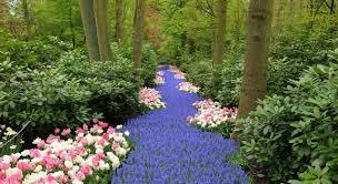one of world u0027s most beautiful garden in keukenhof netherlands and