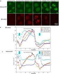 Cell Cycle Concept Map Quantitative Microscopy Uncovers Ploidy Changes During Mitosis In