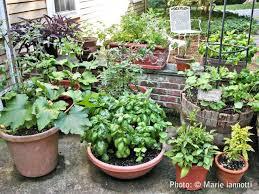 container vegetable gardens gardening ideas