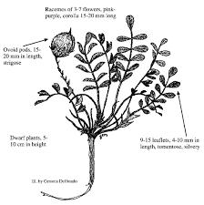 colorado native plant society colorado rare plant guide