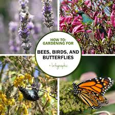Butterfly Garden Layout by Green In Real Life Ideas For The Home Garden Bees Birds And