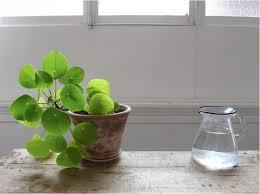 5 favorites mini houseplants for apartment living gardenista