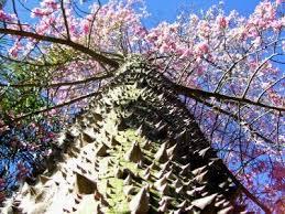 top 10 amazing trees toptenz net