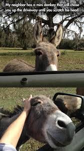 that ll do donkey that ll do
