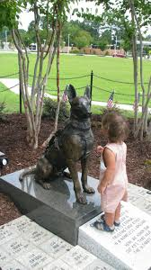 belgian shepherd qld 25 best dogs images on pinterest