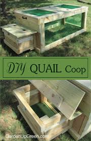 thinking about raising quail build your own diy quail coop this