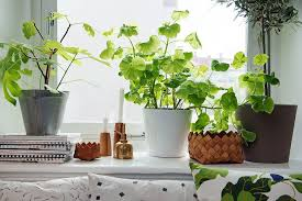 apartment plants pictures plants for small apartments best image libraries