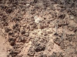 biological soil crust wikipedia