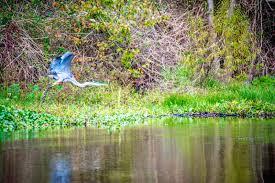 Louisiana wildlife tours images Cajun encounters tours new orleans louisiana jpg