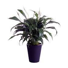 low high low house plants indoor plants the home depot