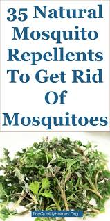 How To Get Rid Of Mosquitoes In My Backyard Best 25 Homemade Mosquito Repellant Ideas On Pinterest Natural