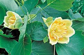 Best Trees For Backyard by Flowering Trees Tree Growing Birds U0026 Blooms