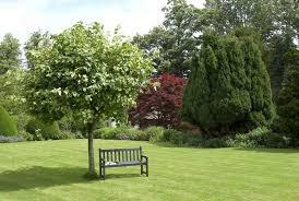 albero giardino alberi ornamentali alberi alberi per ornamento
