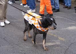 is a bluetick coonhound a good pet smokey mascot wikipedia