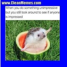 Clean Memes - pin by clean memes on clean memes pinterest memes