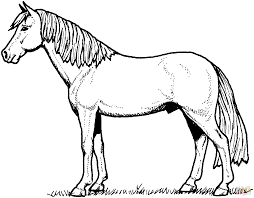 stallion horse coloring free printable coloring pages