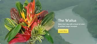 Flowers Direct Order Tropical Flowers Direct From Kauai Hawaii Kalani Tropicals