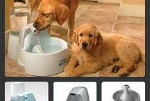 Gadgets For Pets Tagapet Lost Scanned Found Tagapet On Pinterest