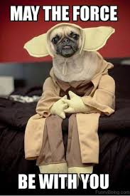 May The Force Be With You Meme - 85 mad pug memes