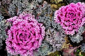 4 fall and winter varieties to spruce up your business carolina