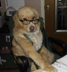 Dog With Glasses Meme - financial advice dog know your meme