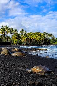swimming with sea turtles in hawaii black sand sand beach and