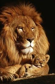 a momma u0027s love amazing animals pinterest animal epaule