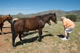 Nice Hourse U0026 Judy Pierce Range Horses