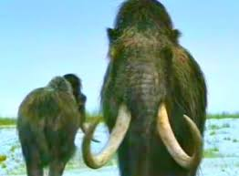 russian scientists clone woolly mammoths extinct animals