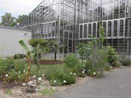 Tropische Pflanzen Im Garten Nutzpflanzen Im Botanischen Garten Freiburg U2014 Botanischer Garten