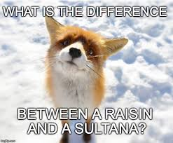 Meme Fox - confused little fox asks the big questions in life imgflip