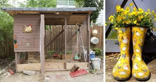 biosecurity for backyard chickens how to keep a healthy flock