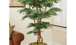 plant trm 05 amazing trees and plants 5 pagoda ming aralia