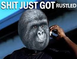 Gorilla Munch Meme - pics that make you laugh ot pic harder page 195 neogaf