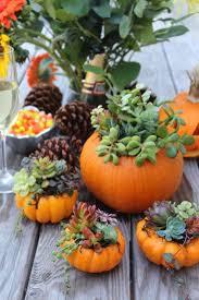 Unique Thanksgiving Centerpieces 114 Best Pumpkins And Succulents Images On Pinterest Succulent