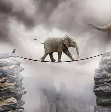 baby elephant photograph by by sigi kolbe