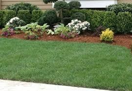 Bushes For Landscaping Shrubs Bushes Landscaping Bushes For Landscaping Bushes