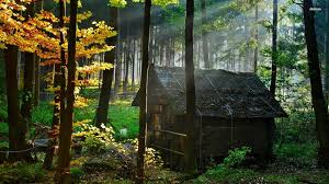 Beautiful Abandoned Places by Abandoned House Wood Google Search Anime Movie Pinterest