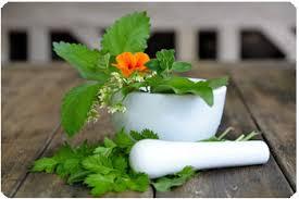 les herbes aromatiques en cuisine les aromatiques au jardin cuisine et bienfaits bien être au
