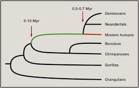 bentley orangutan the human condition u2014a molecular approach cell