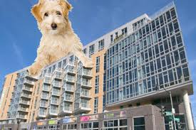 d c to get its first dog daycare in a mixed use building curbed dc