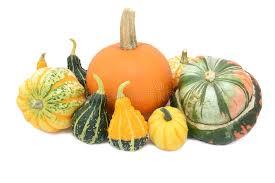 pumpkin festival squash turks turban and ornamental gourds stock