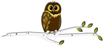 drawn owl branch drawing pencil and in color drawn owl branch