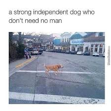 Independent Woman Meme - a strong independent woman who don t need no man memes best