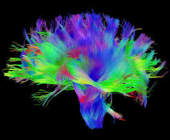 Human Brain Mapping Can We Figure Out The Brain U0027s Wiring Diagram Neurobanter