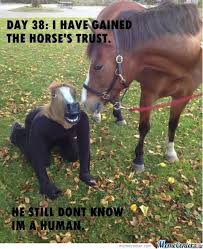 Soon Horse Meme - rolling horse memes best collection of funny rolling horse pictures
