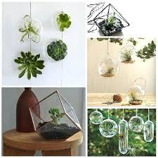plante cuisine decoration deco plantes walkabouthotel info